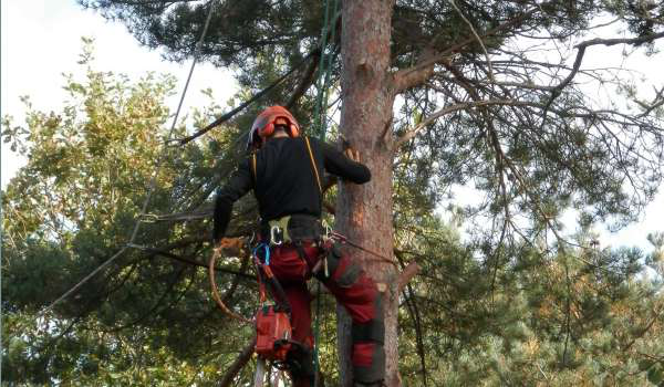 NPTC 0020-07 Rope & Harness & NPTC 0020-13 Tree Climbing & Rescue (CS38) (Short Course) - bt365体育农村(奥特利)